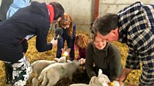 Behind the scenes at the Glastry lambing shed