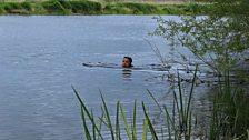 Swimming the Avon