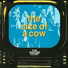 The Size Of A Cow