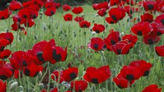 Vaughan Williams: Symphony No. 3 'Pastoral Symphony'