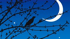 How do you duet with a nightingale?