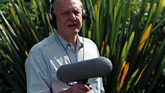 The day Björk met Sir David Attenborough…