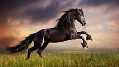 Galloping Home, by Denis King