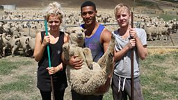 Bbc Three World S Toughest Jobs Sheep Shearing In New