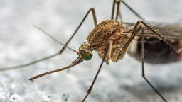 Zika threat and back from space  寨卡病毒威胁美国,国际空间站宇航员返回地球