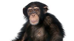 Hair and evolution 毛发和进化论