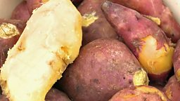 Sweet potato and malnutrition, British polar research ship 红薯改善营养不良, 英极地科考船