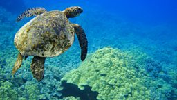 Great Barrier Reef destruction, mission to clean space 澳洲大堡礁珊瑚大规模死亡、清理太空垃圾