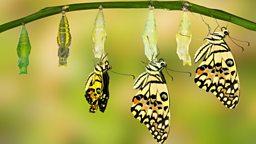 "Convey, convert, transform 和 divert 四个含有""转换""意思的单词"