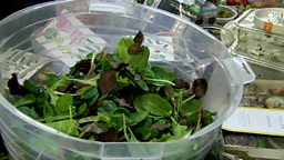 Sharing waste food and steepest street 剩余食材再利用、最陡的街道