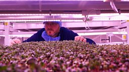 Farming in a bunker and corporate wellness 地下农场、企业员工的身心健康