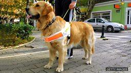 Hero hounds 英雄猎犬