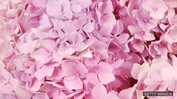 """英语里""""pink 粉红色""""的含义"""