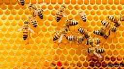 "'Online' bees 科技蜜蜂已""上线"""
