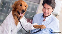 The dogs who safeguard our hearts 养狗能保护我们的心脏健康