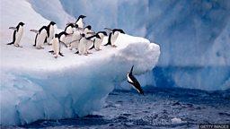 Antarctic discoveries 科学家发现南极海洋中的生态系统