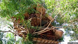 The trend for tree houses 世界各地树屋建筑的兴起