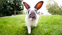 Rabbits: cuddly friends or cunning tricksters?