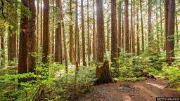 Trees talking to trees 树与树之间的对话
