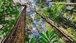 The Amazon and climate change 亚马逊雨林砍伐与气候变化的关系