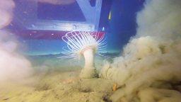 Deep-sea mining 深海采矿