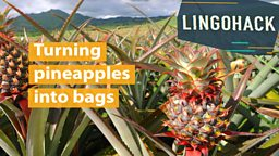 Turning pineapples into bags