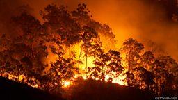 Australia fires: Farmers face losses 澳大利亚林火:农民面临损失