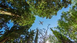 Can trees help climate change? 植树是否有助于应对气候变化?