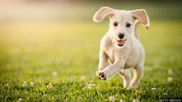 What does a dog mean when it wags its tail? 狗摇尾巴是什么意思?