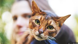 Why do cats purr? 猫咪为什么发出咕噜声?