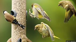 Wildlife in lockdown 野生动物在新冠肺炎疫情封锁期间的生活