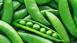 Making 'plastic' from peas 豌豆变塑料