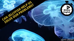 Can jellyfish help us solve our problems?