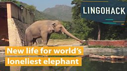 New life for world's loneliest elephant