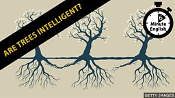 Are trees intelligent?