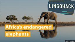 Africa's endangered elephants