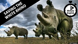 Saving the white rhinos