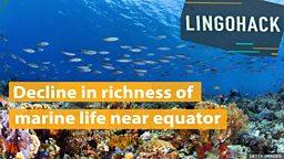 Decline in richness of marine life near equator