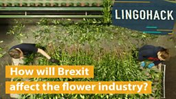 How will Brexit affect the flower industry?