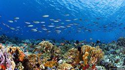 Decline in richness of marine life near equator 赤道附近海洋生物多样性有所下降