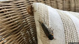 The cicada invasion 周期蝉蛰伏17年后破土而出