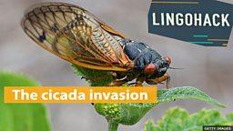 The cicada invasion