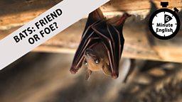 Bats: Friend or foe?