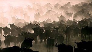 Nature's Great Events - The Great Migration