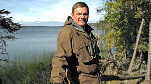 Ray Mears's Northern Wilderness - 1. The Forgotten Forest