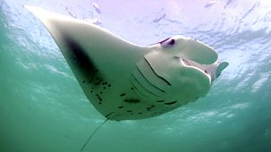 Natural World - 2009-2010 - Andrea - Queen Of Mantas