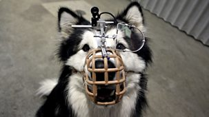 Horizon - 2009-2010: 8. The Secret Life Of The Dog