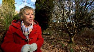 Life In A Cottage Garden With Carol Klein - Original Series: 1. Winter