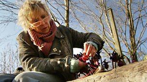 Life In A Cottage Garden With Carol Klein - Original Series: 2. Spring