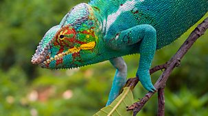 Madagascar - 1. Island Of Marvels